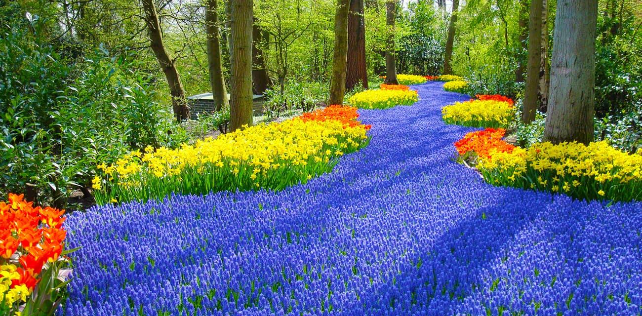 荷蘭庫肯霍夫花園的花海